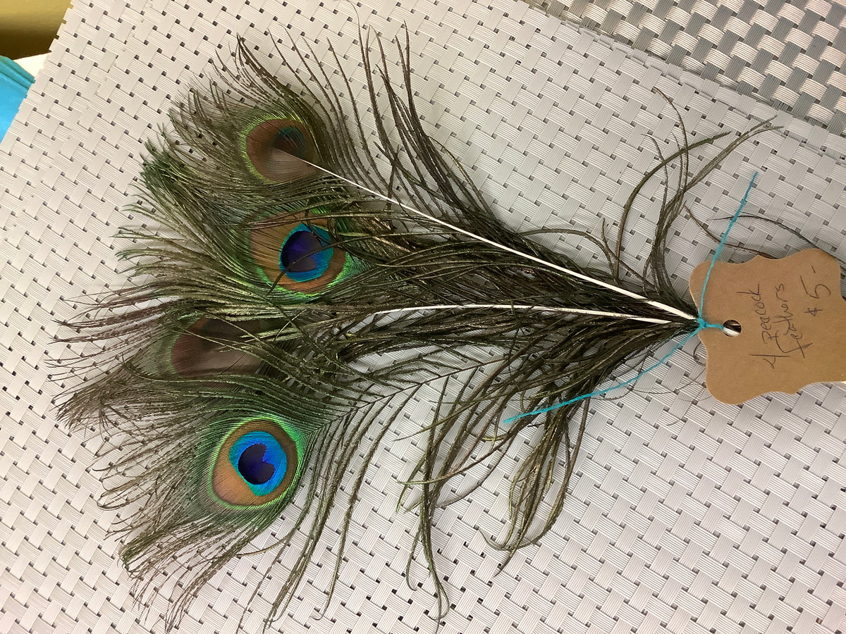 4 piece peacock feathers