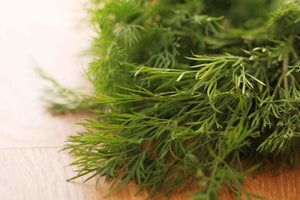 Fresh Dill / Eneldo (Bunch / Manojo)