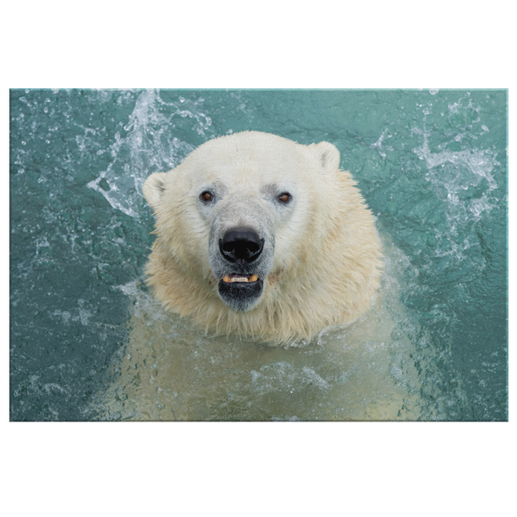 STRETCHED CANVAS - COOL IN THE POOL - Canadian Polar Bear Habitat Market