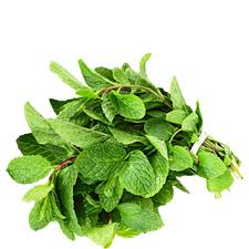 Clearance Stock Fresh Mint Leaves - 1 Bunch