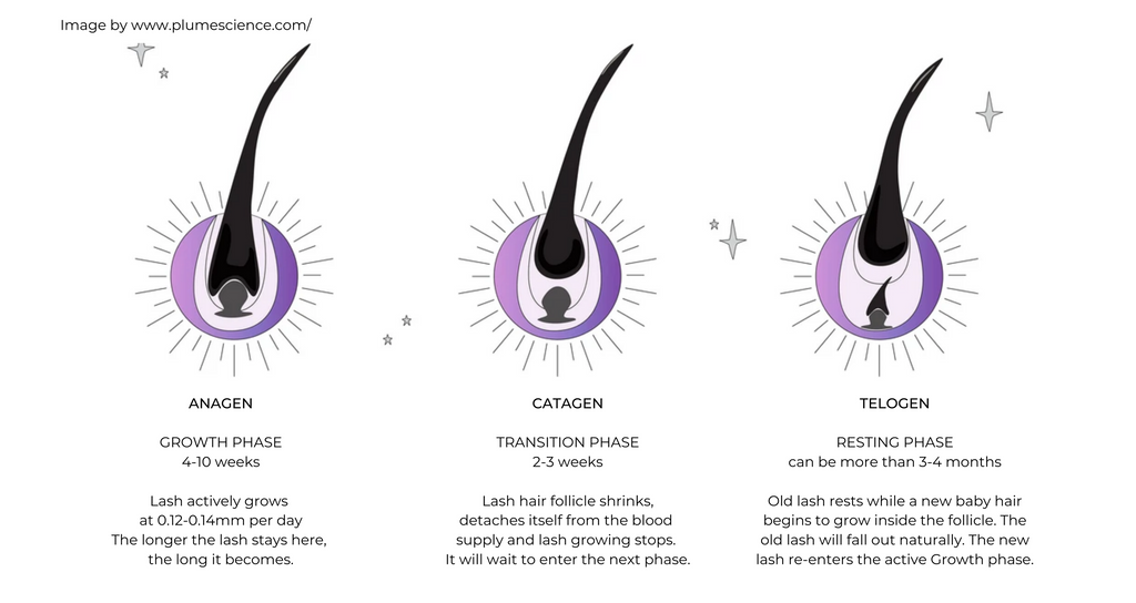 Lash serums help at every of the three stages of lash growth, Anagen, Catagen, Telogen