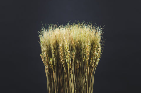 Organic wheat is fermented and distilled into organic wheat alcohol
