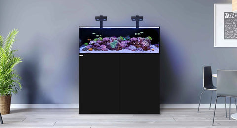 WATER BOX AQUARIUM AT REEF AQUARIA, MARINE AQUARIUM AUCKLAND