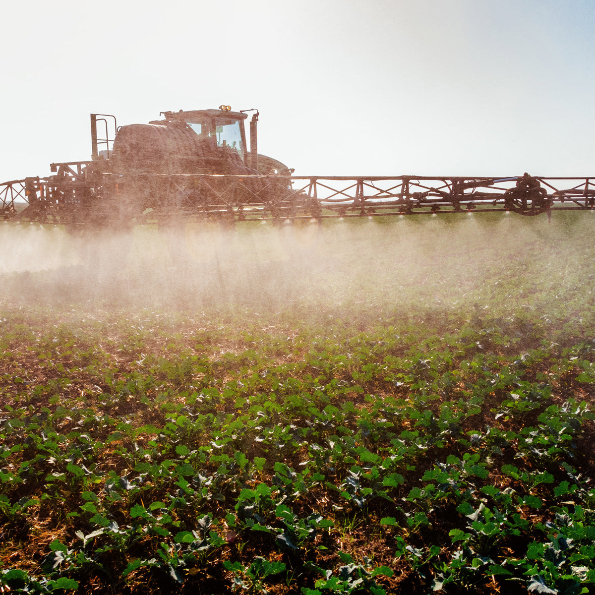 Glyphosate doesn't just harm weeds; it harms everything from soil to crops, animals to humans.