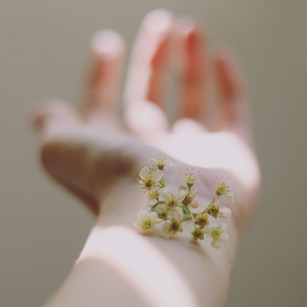 flowers balanced on wrist
