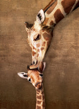 Afbeelding in Gallery-weergave laden, Puzzle Giraffe mother's kiss 1000pcs