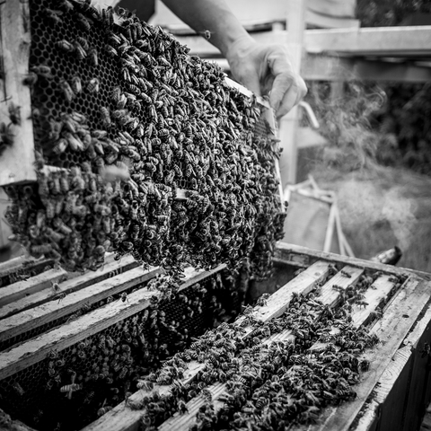 Beekeepers Caring for Bees