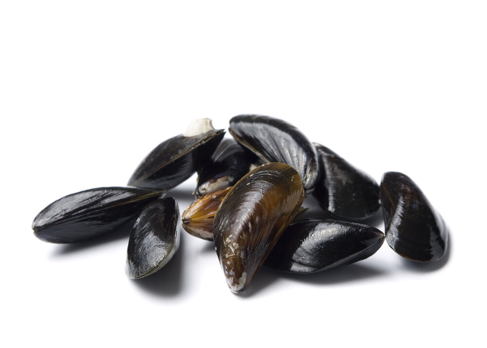 Marshall Cove Mussels (Sold by each)