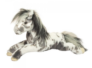 Douglas- Starsky the Appaloosa Horse
