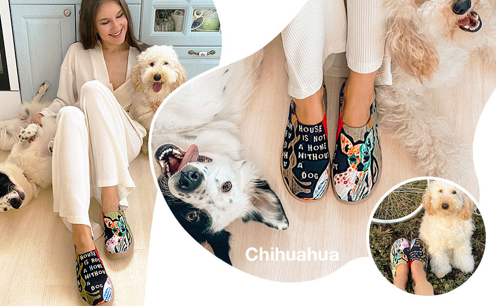 Uinshoes-Chihuahua-Animal collection