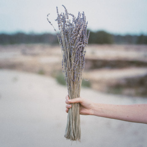 hand holding a lavender bouquet in nature