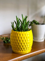 Pineapple Inspired Planter with Water Tray