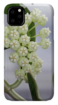 Hoya Carnosa / Porcelainflower iPhone 11 case