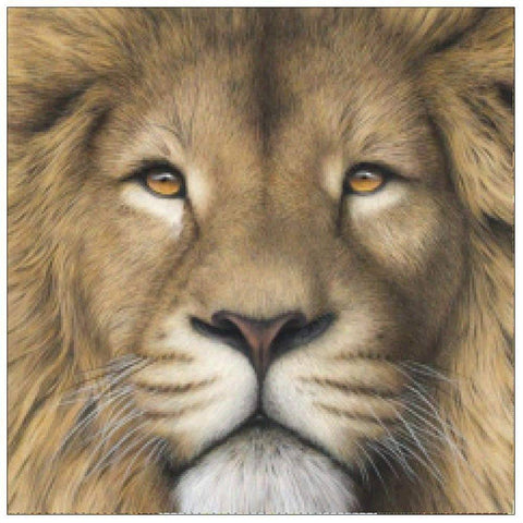 Diamond Painting-Partial Drill Lion