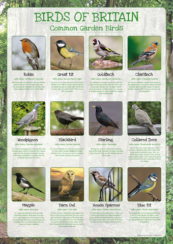 Birds of Britain Poster - Common Garden Birds