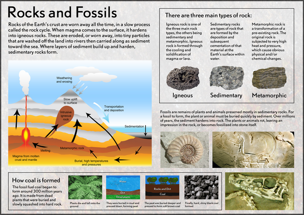 Our Earth Rocks Amp Fossils Poster Tiger Moon