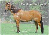 Points of the Horse Poster