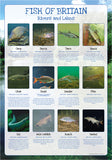 Fish of Britain Poster - Rivers and Lakes