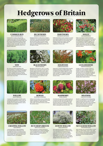 Hedgerows of Britain Poster