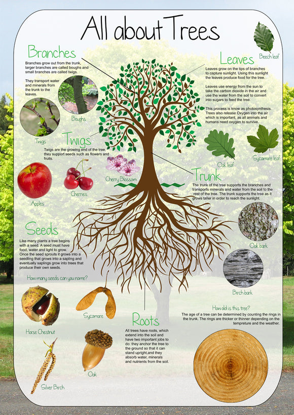 All about Trees Poster