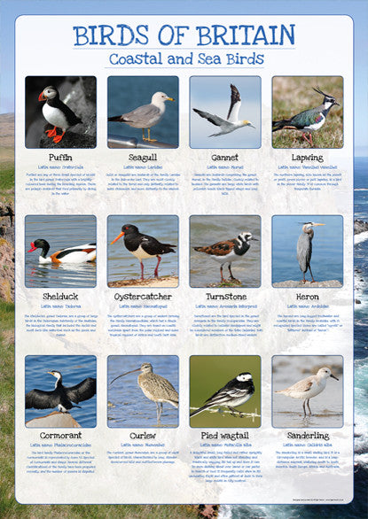 Birds Of Britain Poster Coastal And Sea Birds Tiger Moon