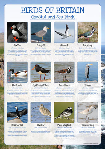 Birds of Britain Poster - Coastal and Sea Birds