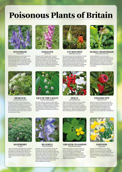 Poisonous Plants Of Britain Poster Tiger Moon