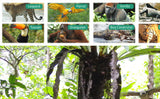 Creatures of the Rainforest Poster
