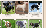 Popular Breeds of Dogs Poster