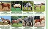 Popular Breeds of Horses Poster