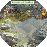 This bundle of four mats is ideal for use with a Tuff Tray. They're perfect for individual or small group play. The trays enable children to add water, toys, sand, pebbles and leaves to create interesting small environments.  Included in this bundle is:      British Pond     A Path Through the Forest     British Wildlife     Rock Pool