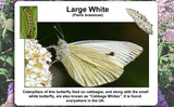 Butterflies of the United Kingdom - Top Ten Butterfly Species Poster