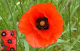 Remembrance Day Photo Pack