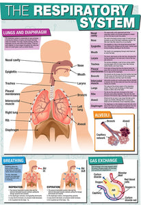 GCSE Science The Respiratory System - A2 Poster