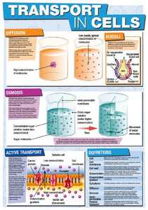 GCSE Science Transport in Cells - A2 Poster
