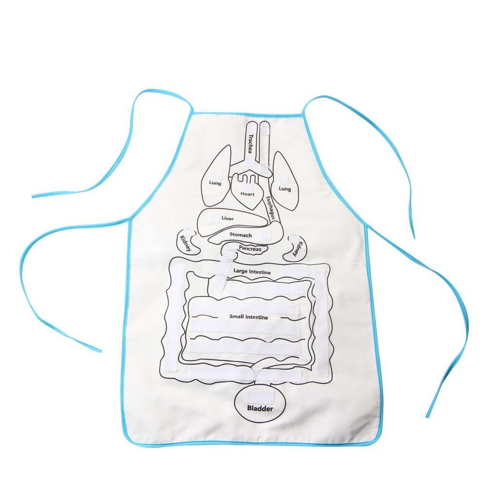 Early Learning Human Organ Cognition Apron