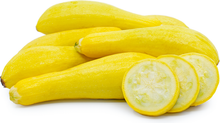 Load image into Gallery viewer, Zucchini - Yellow