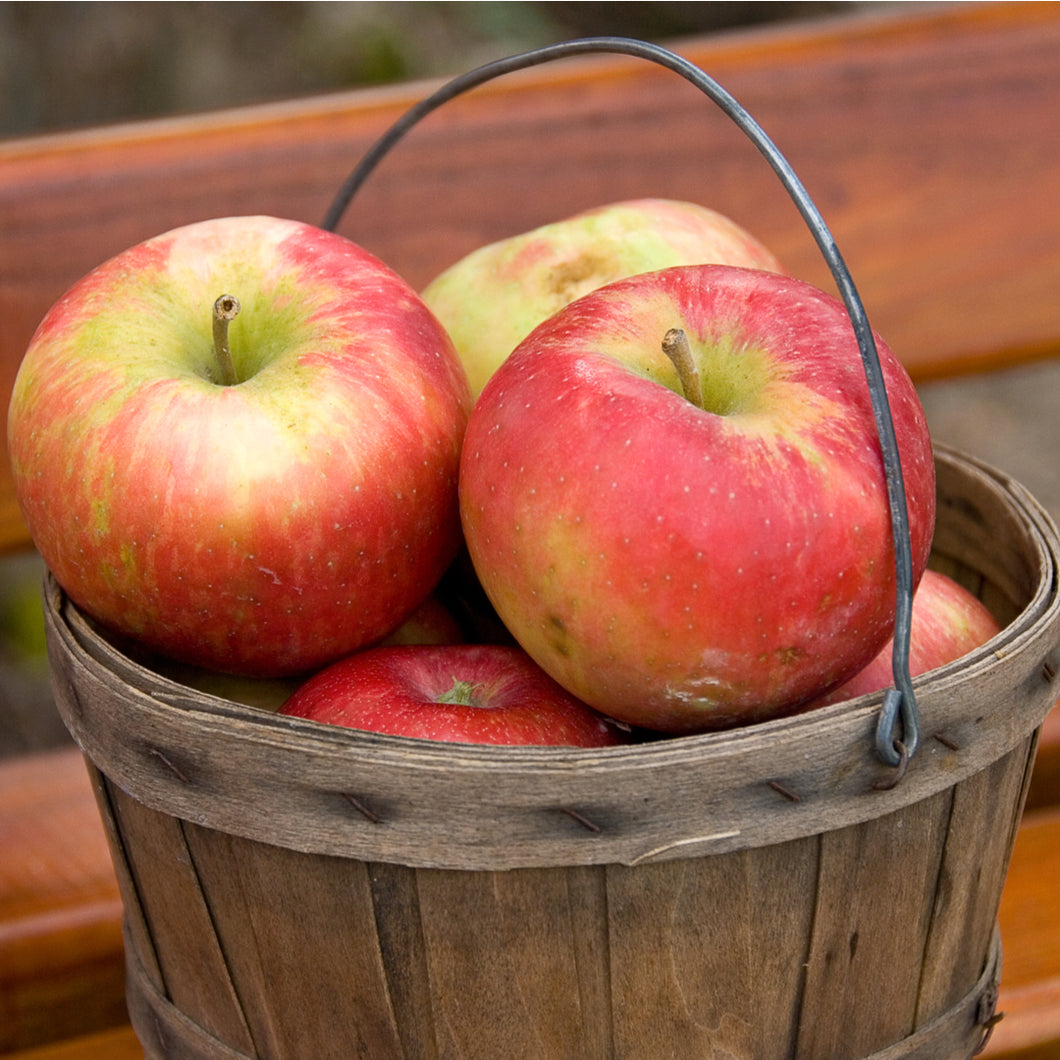 Apples - Honey Crisp (each)  Extra large