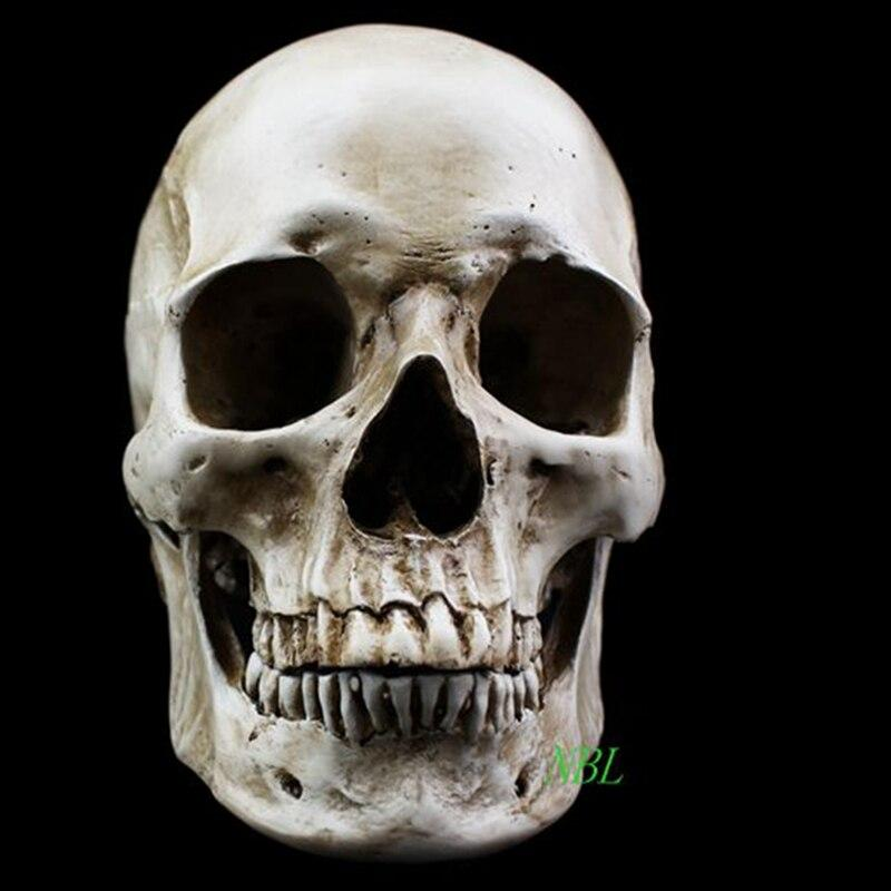 Human Natural Head Skull Model High Simulation 1:1 Skeleton White Medical Human Skull Model Still Life Painting Resin Masks