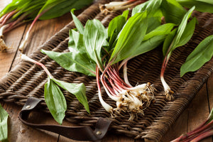 Fresh Avery County Ramps