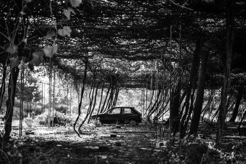 car in forest