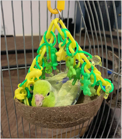 Green Parrotlet in Coco Nest Coconut Swing for Small Birds
