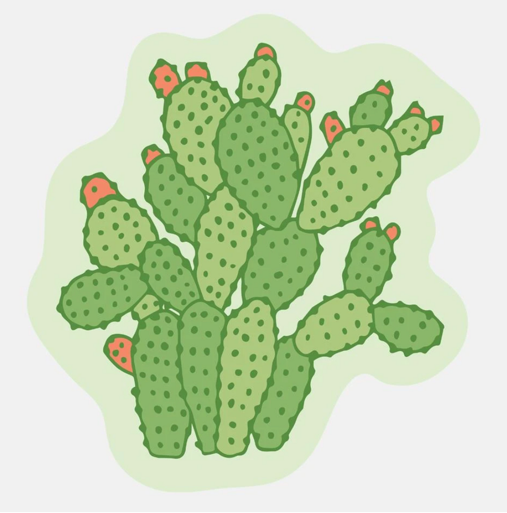 Cactus Illustrated Sticker