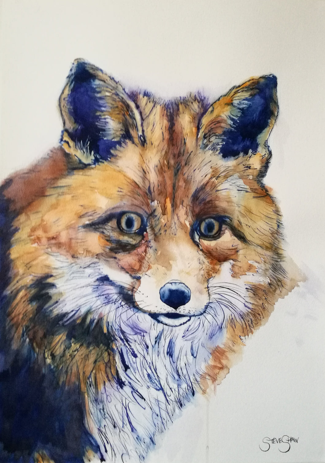 Mr Fox. Watercolour on paper. 42cm x 59.4cm
