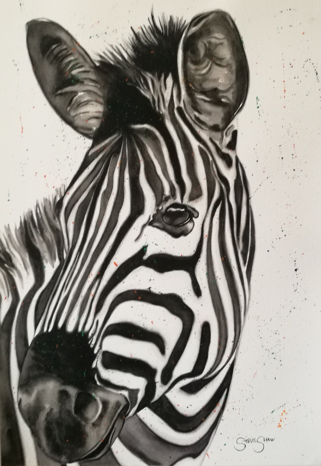 Watercolour Zebra. On paper. 42cm x 59.4cm.