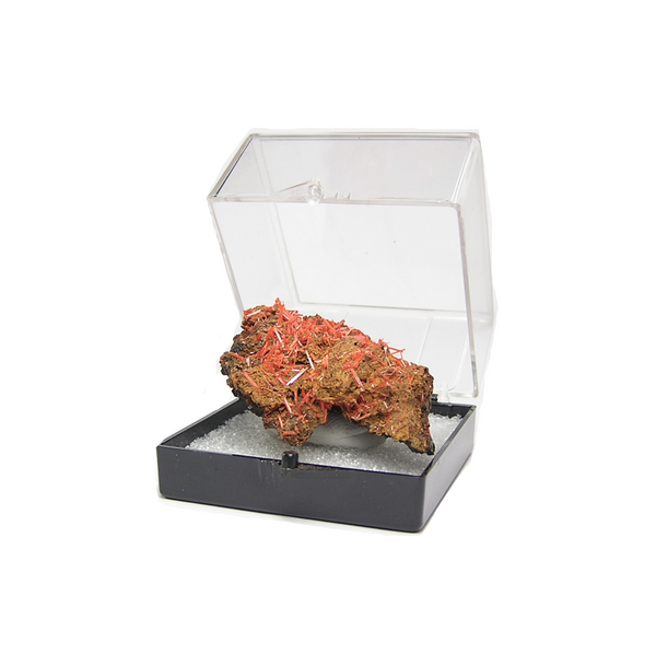 Crocoite Crystal Cluster in rock matrix Rare Mineral Specimen Mined in Tasmania, Old stock
