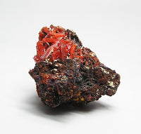 Crocoite Crystals on rock matrix Rare Orange Mineral Mined in Tasmania