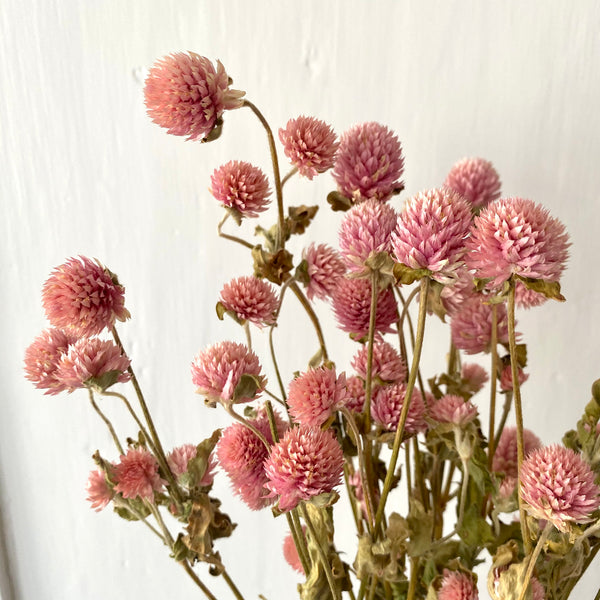 Dried Pink Gomphrena