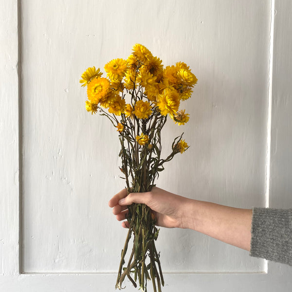 Dried Natural Yellow Helichrysum