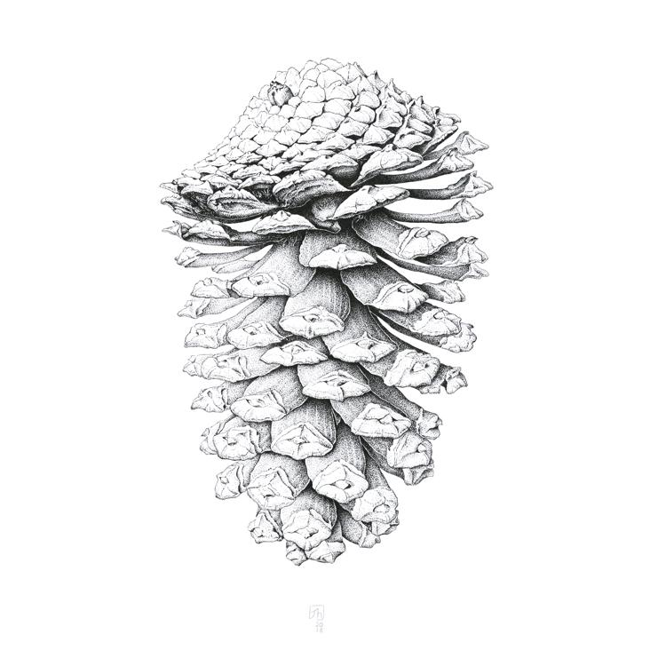 'Pinecone | Limited Edition' by Jenny Haslimeier - Quirky Fox